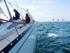 exocet-rund-fehmarn-2012-31
